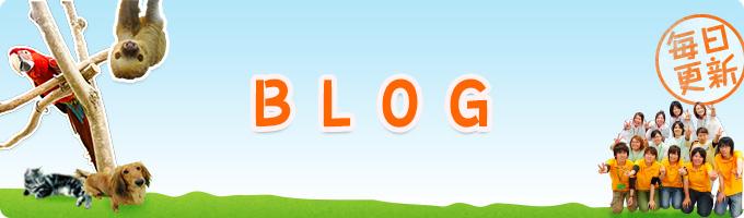 毎日更新!ブログ