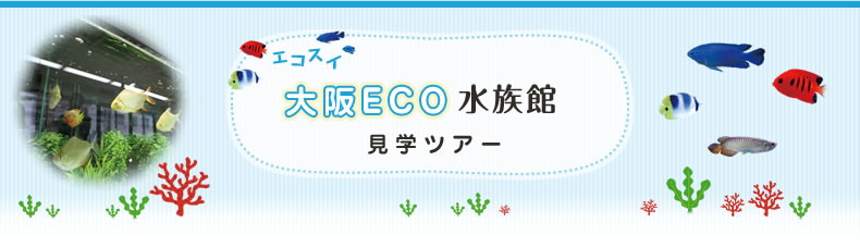 エ・コ・ス・イ!!!!!大阪ECO水族館見学ツアー
