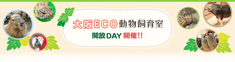 大阪ECO動物飼育室 開放DAY開催!!